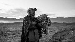 Volcano+Horses+by+Fraser+Morton3